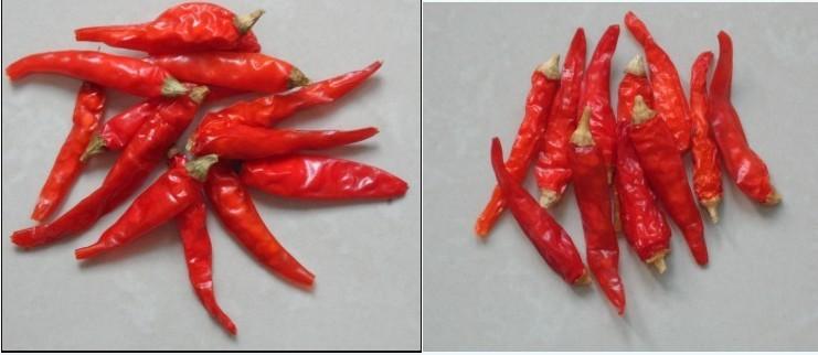 云南艳红椒