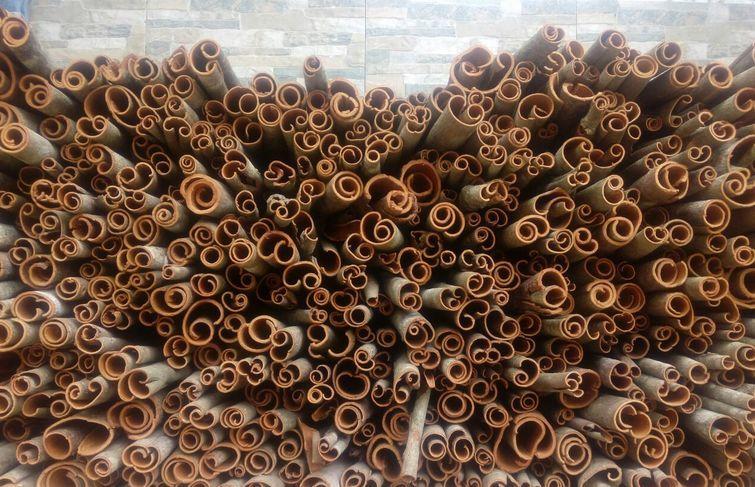 """防城港是中国三大香料基地之一,被外界誉为""""世界香料原料库"""""""